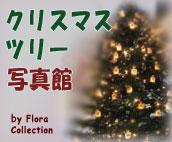 クリスマスツリー写真館